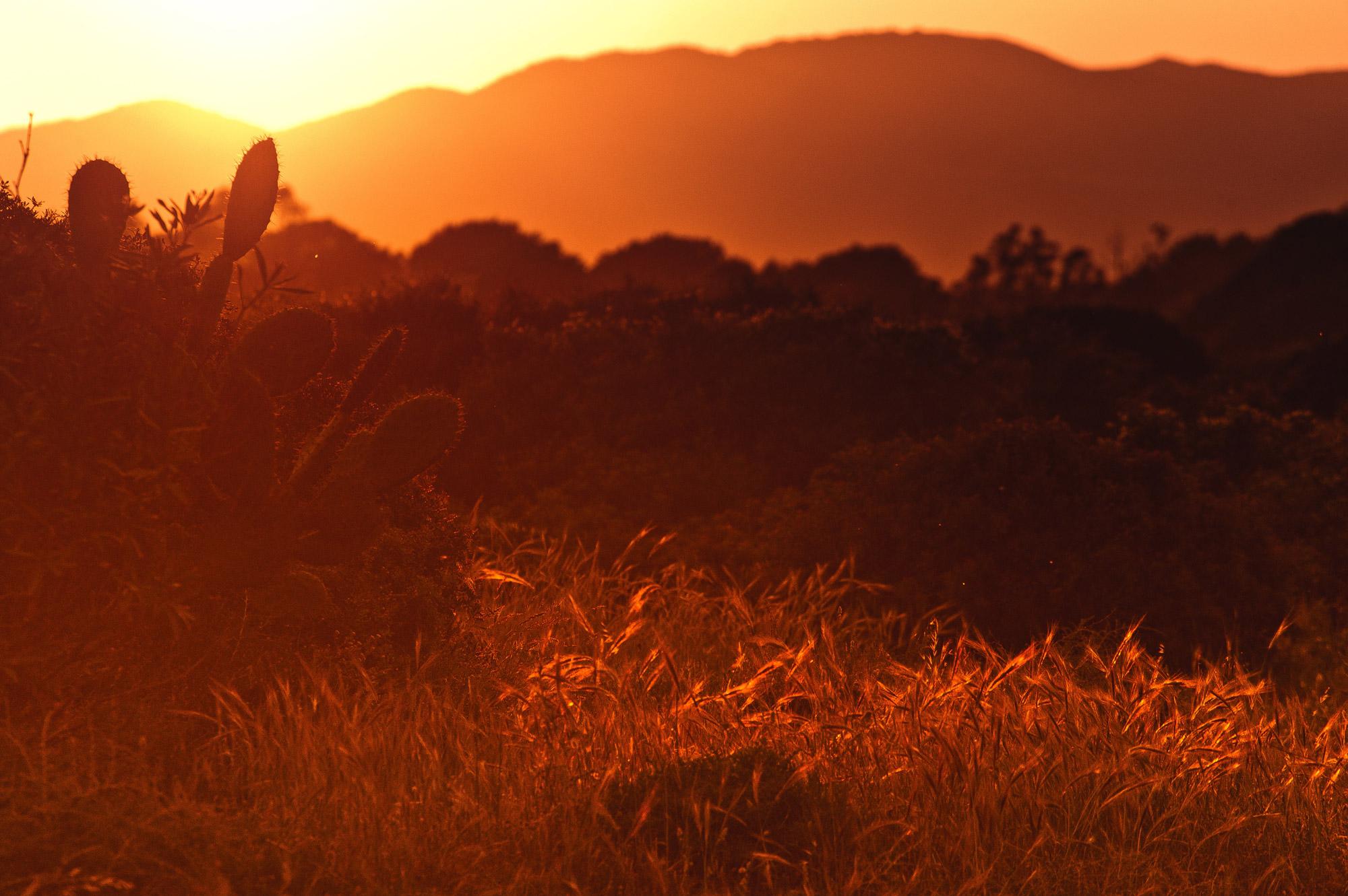 iwfruyqpcbq-loreta-pavoliene – Sonoran Prevention Works